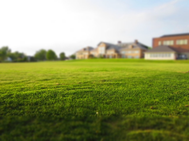 mowed lawn photo
